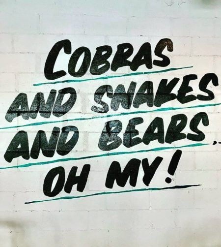 Wall decal that says cobras and snakes and bears oh my!